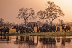 Kwando Elephants