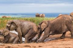 Elephants having fun at the waterhole