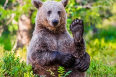Brown Bear Yoga