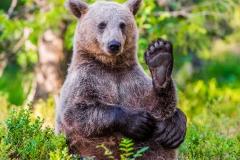 Brown Bear Yoga
